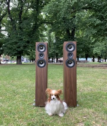 Acoustic Energy 509 Floorstanding Speaker ... a column of carbon