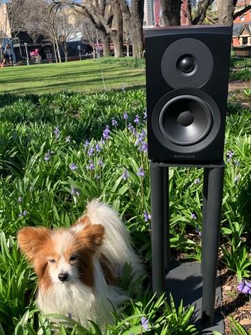 Dynaudio Emit M10 new 2021 version of this acclaimed bookshelf speaker