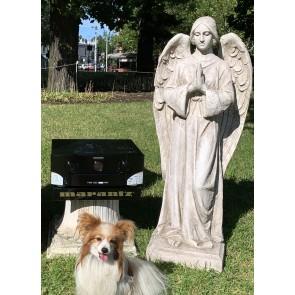 Park Angel and Marantz
